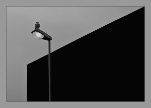 Diagonale con gabbiano e lampione acceso Musiculturaonline