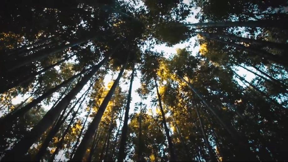"""Pietro Saino: online il lyric-video di """"Autunno giapponese"""""""