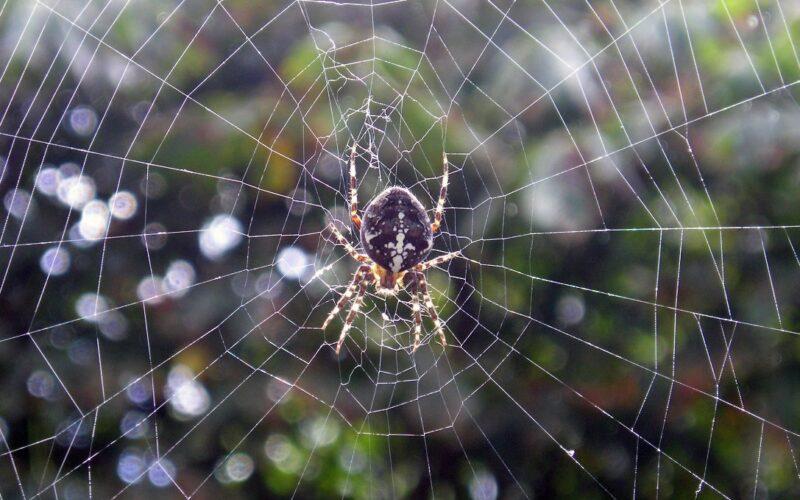 Web e musica, l'arte del ragno